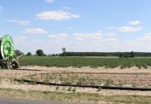 Ministerstwo ponawia apel o szacowanie strat suszowych