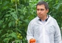 O pomidorach w Tłokini Kościelnej