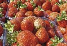 Globalny rynek truskawki rośnie