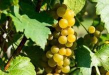 Obrót hurtowy wyrobami winiarskimi