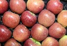 Ile i z których państw Rosja importowała jabłka w 2017 r.