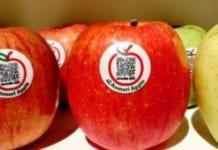 Każde jabłko jest unikatowe