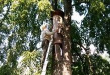 Wielki powrót barci do polskich lasów