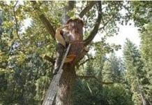 Naukowcy o leśnych pszczołach: kondycja zadowalająca, miód dobrej jakości