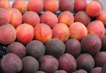 Wstępne prognozy tegorocznej produkcji owoców pestkowych