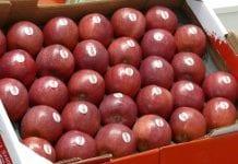 Kończą się jabłka we Włoszech. Stan zapasów – 1 kwietnia 2018 r.
