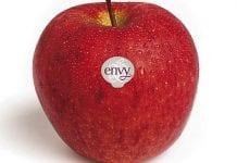 Nowozelandzki eksport jabłek