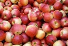 Hurtowe ceny jabłek w Południowym Tyrolu