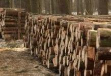 Koniec dotacji dla spalania w elektrowniach drewna wysokiej jakości