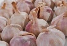 Co piąte ekologiczne warzywo pochodzi ze Świętokrzyskiego