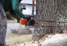 Sejm zmienił przepisy o wycince drzew na własnej działce