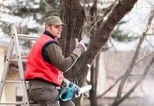 Od Nowego Roku łatwiej wyciąć drzewa na własnej działce