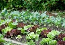 W Rzymie powstało 75 ogródków warzywnych na ziemi należącej do Watykanu