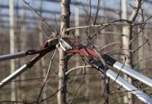 Jest pomysł na biopaliwo prosto z sadu