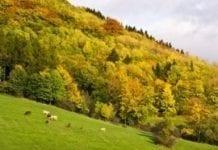 Wypłata dopłat ONW i rolnośrodowiskowych