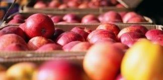 Towary pochodzenia roślinnego – dostęp do rynku krajów trzecich