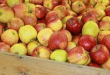 Rosjanie sprawdzą przechowalnie jabłek na Białorusi i w Serbii