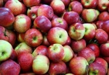 Rekordowe zapasy jabłek w USA