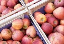 Rosyjskie embargo dla 31 białoruskich eksporterów jabłek