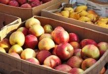 Jabłka Rosja Ukraina Mołdawia