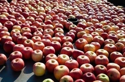 Ceny referencyjne a przyszłość branży owocowo-warzywnej