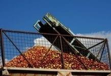 Grójeccy sadownicy będą strajkować?