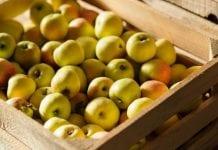 Ile jabłek zbiorą w Rosji?