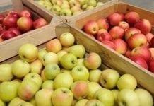 20 marca. Jakie ceny jabłek na rynkach hurtowych