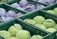 Rosja rozważa możliwość zakazu importu kapusty z Polski