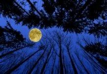 Mroźny Księżyc okazał się łaskawy