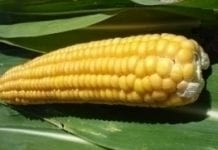 RP apeluje do prezydenta o zawetowanie ustawy o nasiennictwie