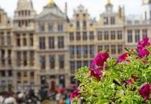 Belgowie znów kupują kwiaty