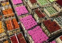 Walentynkowa sprzedaż kwiatów w Europie
