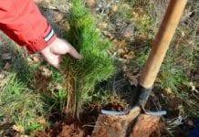 W całej Polsce co minutę przybywa aż tysiąc drzew