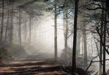 Po 1 maja Lasy Państwowe będą miały prawo pierwokupu prywatnych lasów
