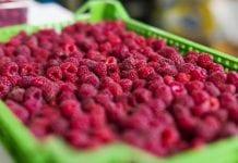 Ceny owoców miękkich – UOKiK i KOWR sprawdzają przetwórców