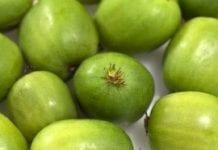 Mini kiwi można uprawiać w Polsce północno-wschodniej