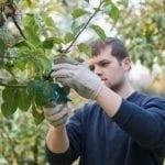 """""""Premie dla młodych rolników"""" – wydłużony termin składania wniosków"""