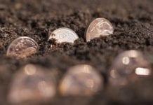 Powstanie Fundusz Ochrony Dochodów Rolniczych