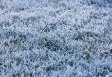 Zimni ogrodnicy nadejdą wcześniej. Będzie mróz i śnieg