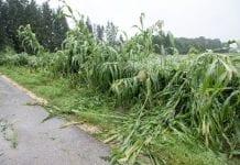 Pomoc dla poszkodowanych przez ubiegłoroczne huragany, deszcze i grad