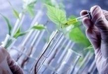 Bioinżynieria – nowy kierunek studiów na UP w Lublinie