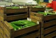 Białoruś ponad dwukrotnie zwiększa import ogórków z Ukrainy