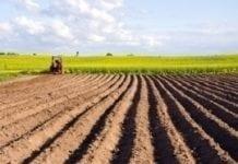 Na bezprawnym użytkowaniu ziemi Skarb Państwa traci miliony