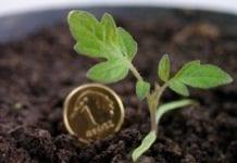 Zainwestują w rolnictwo