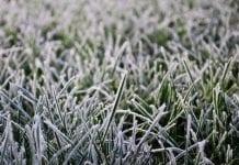 W nocy i o poranku temperatura spadła do minus 6 stopni