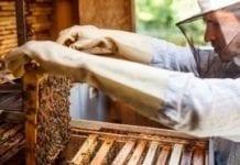Problemy producentów miodu spadziowego