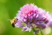 Ukwiecone pola, drogi i koleje przyjazne pszczołom