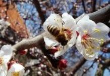 Zmienna pogoda w kwietniu pomoże pszczelarzom?