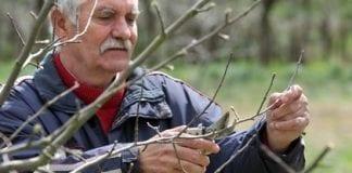 KRUS: od 1 grudnia nowe kwoty zawieszające emerytury